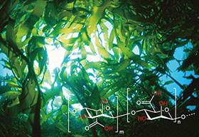 天然保湿成分アルギン酸